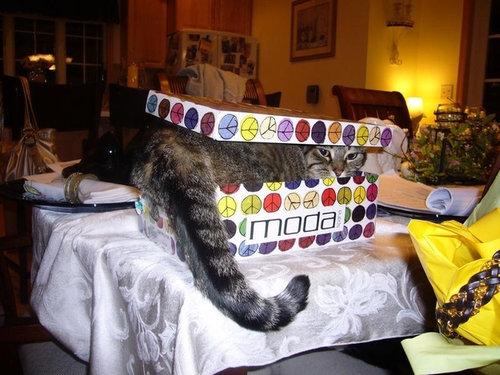 テトリス猫20