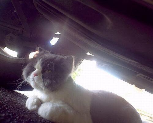 猫の視点25