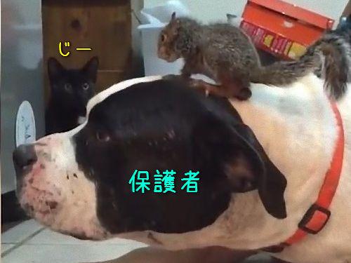 猫からリスを守る犬00