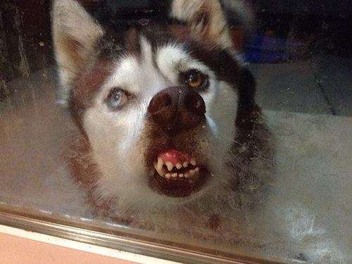 動物「おうちに入れてー!」18