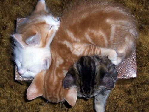 眠る猫00