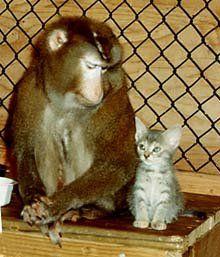 猿と猫の仲14