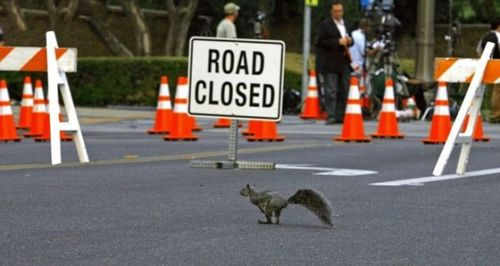 道路を渡る動物10