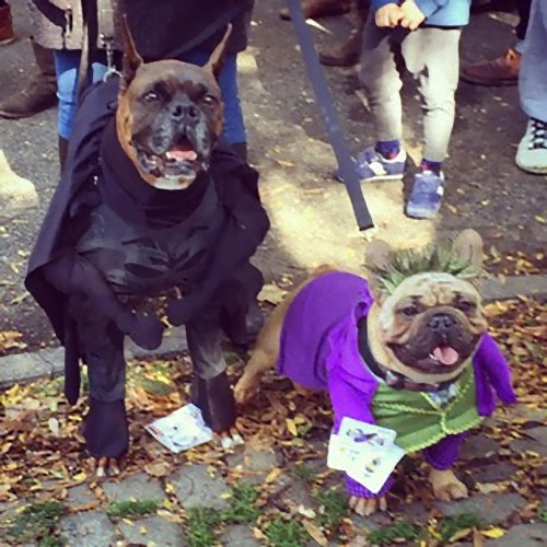 犬のハロウィン02