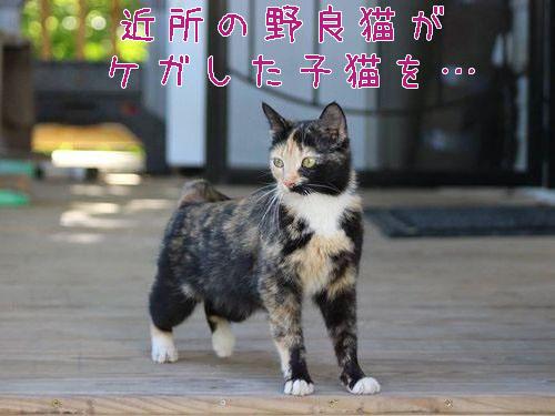 近所の猫が骨折した子猫を連れてきた00