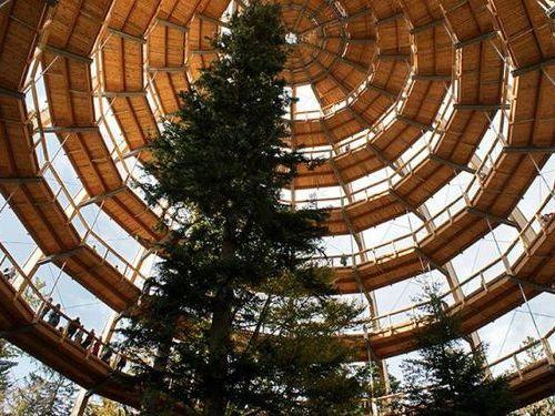 「Tree Top Walk」00