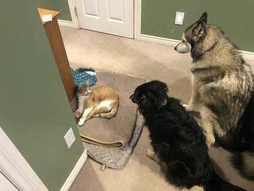 猫にベッドを奪われた犬たち04