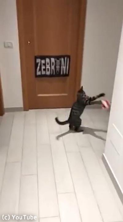 ゴールキーパー猫04