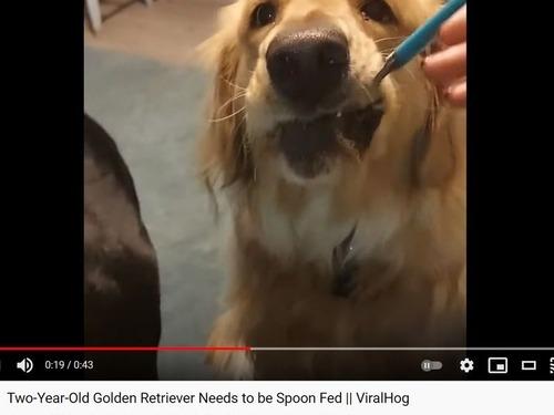 スプーンでご飯を食べる犬