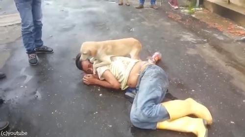 飼い主さんを全力で守る犬01