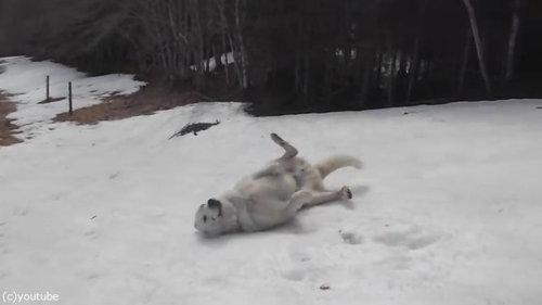 雪に大喜びの犬07