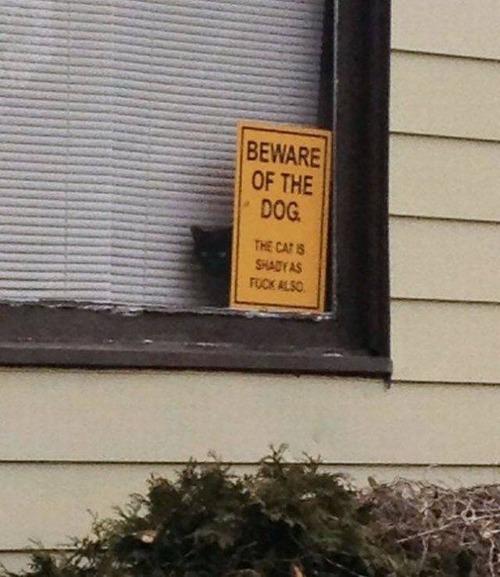 猛犬注意…と思ったら違う例10