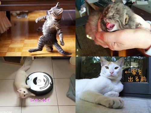 猫の日2019-00