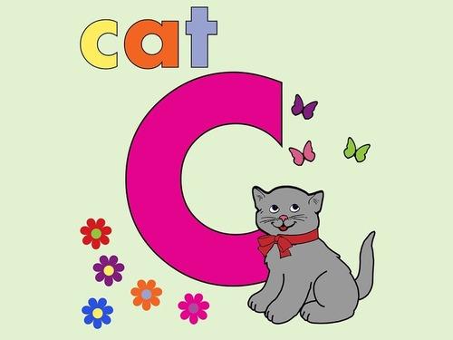 大文字と小文字の猫