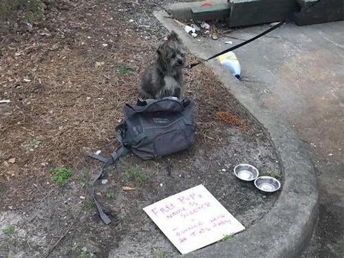 ゴミ捨て場に捨て犬00
