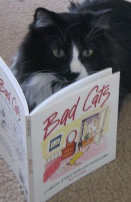 とても賢そうなインテリ猫たち10
