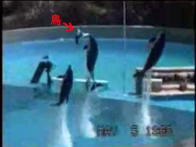 イルカが鳥を空中回転レシーブする動画