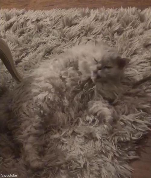 猫の飼い主「うちのラグは一部が動く…」01