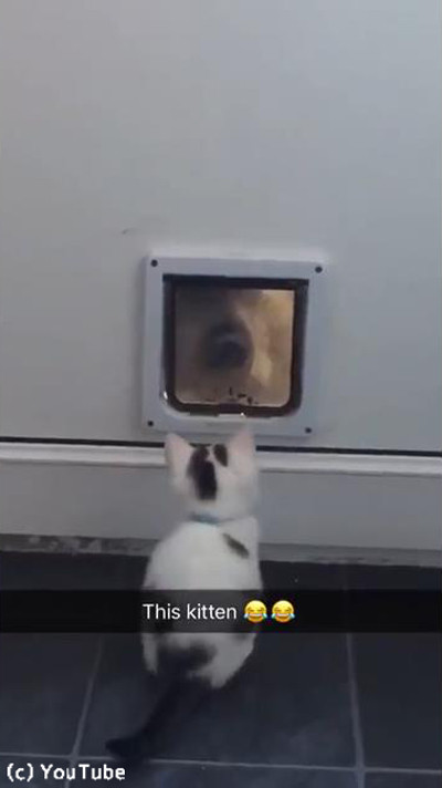 猫ドアで遊ぶワンニャン03