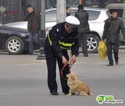 犬と警官05