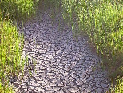 オーストラリアの干ばつ10