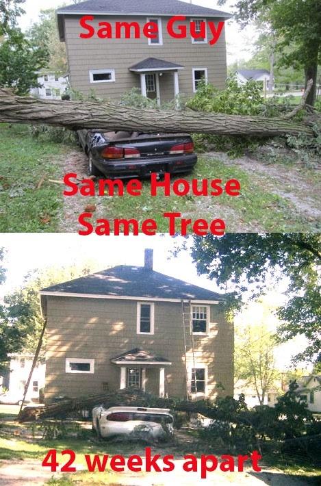 同じ木の枝が倒れた01