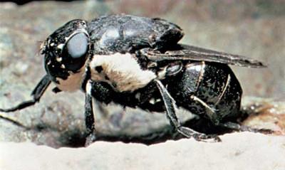 世界で最も危険な恐ろしい虫5-1