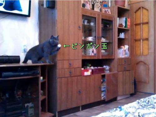 ピンポン玉と猫00