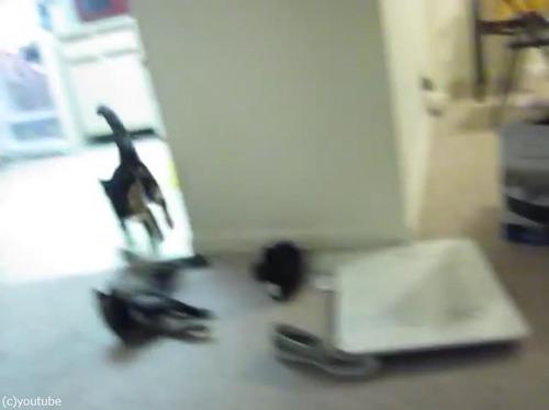 猫、冷蔵庫にまっしぐら01