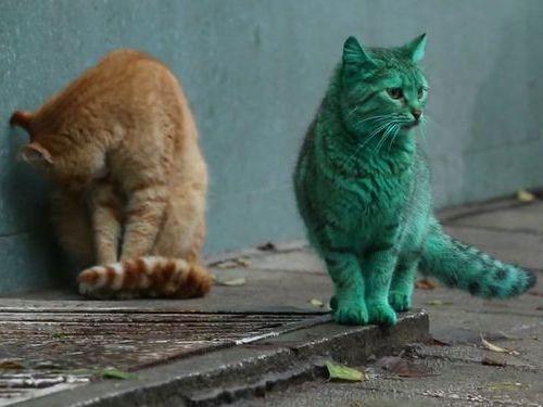 エメラルドグリーン色の猫06