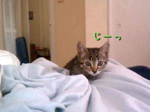 狙いすました子猫