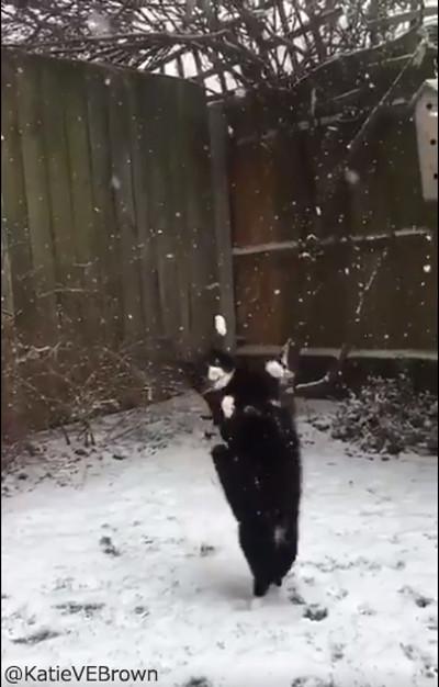 雪をキャッチするにゃんこ05