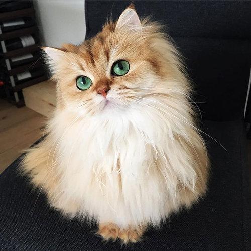 写真写りの良い猫02