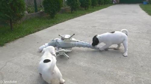 ロボ恐竜に戦いを挑む子犬たち05