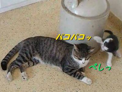 圧倒的な防御力をほこる猫_s