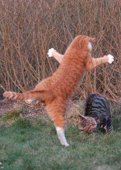 壮絶なる2匹の猫11
