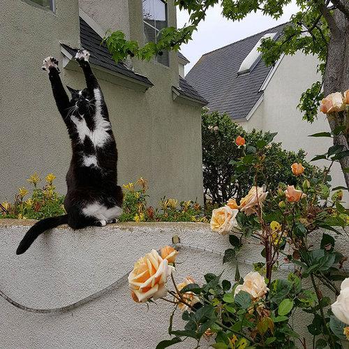 ばんざい猫06