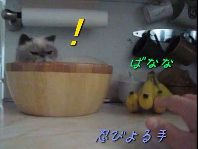 バナナをとられたくない猫