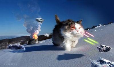 猫スターウォーズ11