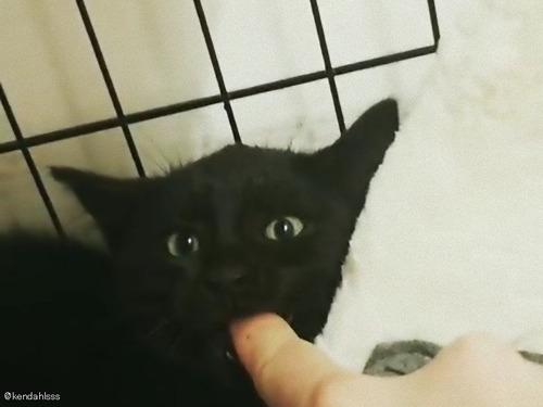 お怒りの子猫、指をくわえるとおとなしくなる02