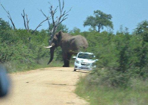 アフリカゾウの恐怖04