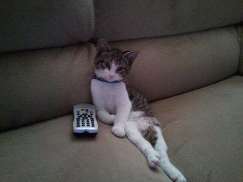 テレビを見るのを邪魔する猫13
