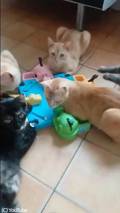 テーブルゲームで遊ぶ猫たち02