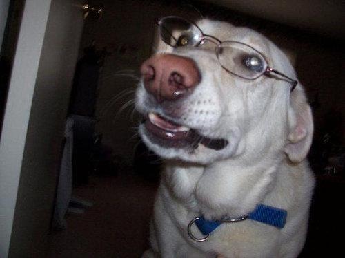 11メガネやサングラスをかける動物たち