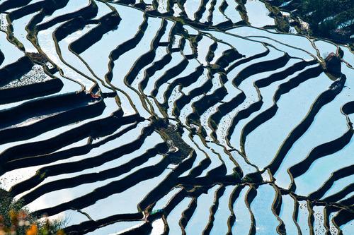 絵画みたいな中国の田んぼ02