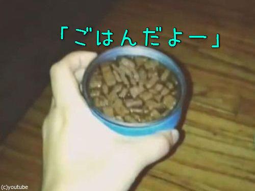 猫の独特な食べ方00