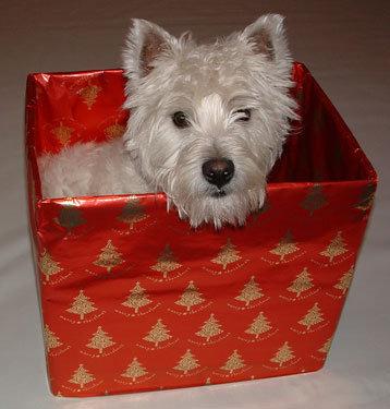 箱好きの犬10