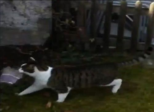 泥棒猫04