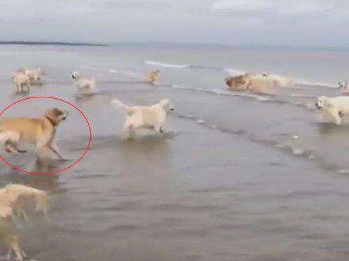 犬の水切り00