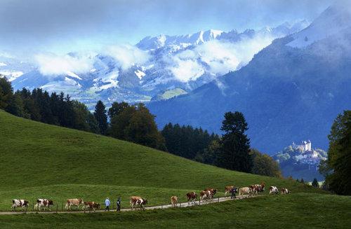 スイス・チーズ05